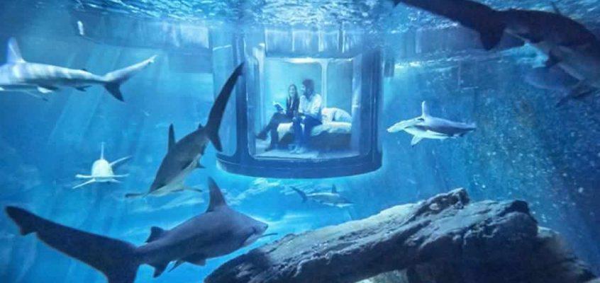 Uma noite com tubarões em Paris (texto em francês)